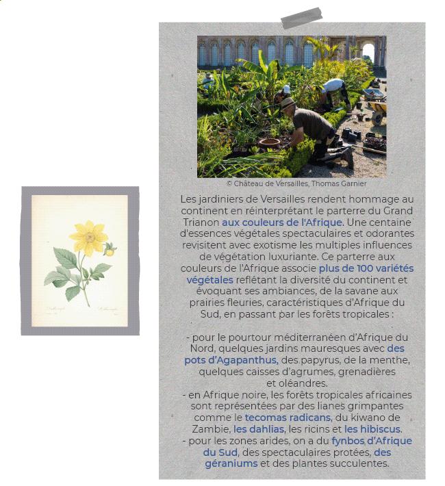Les jardiniers du Versailles rendent hommage au continent en réinterprétant le parterre du Grand Trianon aux couleurs de l'Afrique. Une centaine d'essences végétales spectaculaires et odorantes revisitent avec exotisme les multiples influences de végétation luxuriante. Ce parterre aux couleurs de l'Afrique associe plus de 100 variétés végétales reflétant la diversité du continent et évoquant ses ambiances, de la savane aux prairies fleuries caractéristiques d'Afrique du Sud, en passant par les forêts tropicales : - Pour le pourtour méditerranéen d'Afrique du Nord, quelques jardins mauresques avec des pots d'Agapanthus des papyrus, de la menthe, quelques caisses d'agrumes, grenadières et oléandres. - En Afrique noire, les forêts tropicales africaines sont représentées par des lianes grimpantes comme le tecomas radicans, du kiwano de Zambie, des dahlias, les ricins et les hibiscus. - Pour les zones arides, on a du fynbos d'Afrique du Sud, des spectaculaires protée, des géraniums et des plantes succulentes.